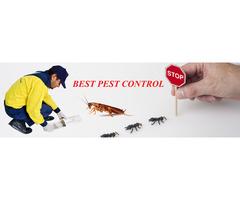 Pest Control Malviyanagar,Delhi